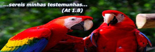 Atos-Graca testemunhar serie